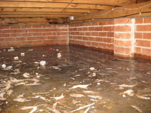 ponding water under house
