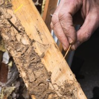 building termite inspection