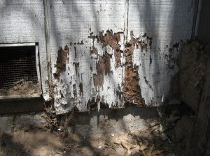 termite damage on home exterior
